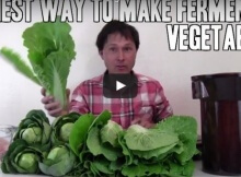 Ferment vegetables