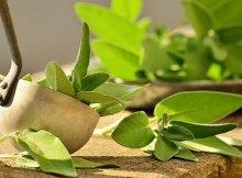 Anti-inflammatory healing herb