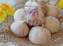 Garlic as a natural antibiotic superfood