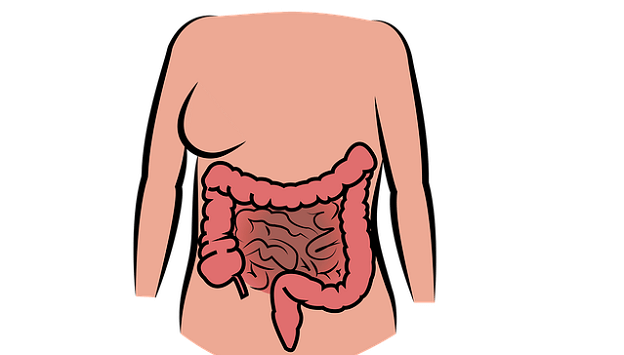 Tips for increasing digestive health